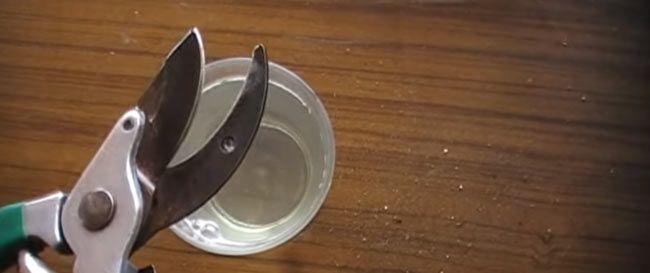 Afilando una tijera de poda profesional