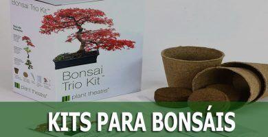 kits para bonsais