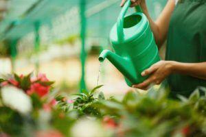 cada cuánto regar las plantas