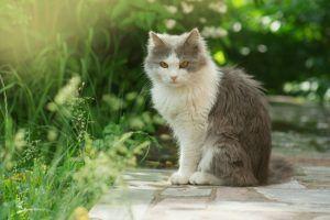 como hacer para que los gatos no entren en mi jardin