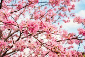 mejores arboles frutales para plantar en el jardin