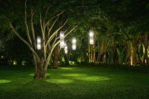 qué árboles podemos plantar en el jardín