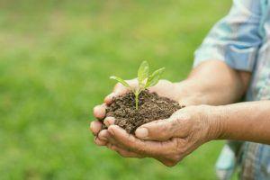 tipos de abono para tu jardín